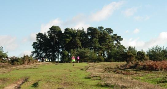 Ashdown Forest Run